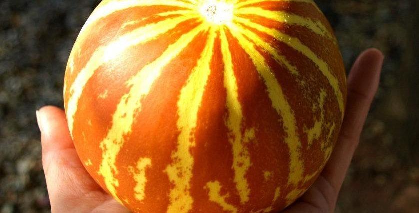 Queen Anne's Pocket Melon