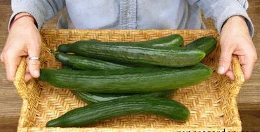 Cucumber - Chelsea Prize