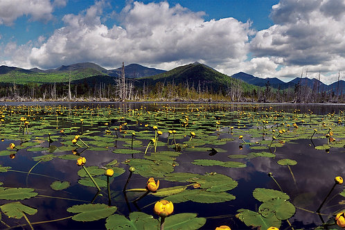 Yellow Water Lilies and the High Peaks