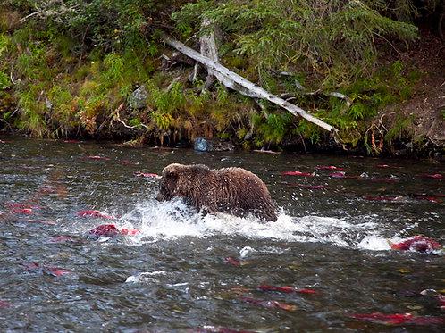 Alaska #42