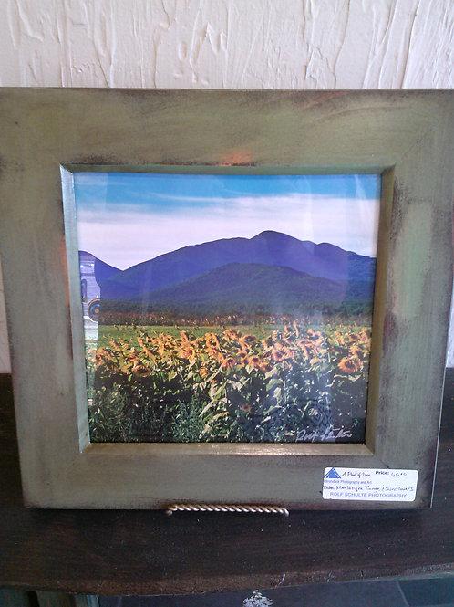 Sunflowers and MacIntyre Range