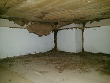Termite infestation under cupboard floor