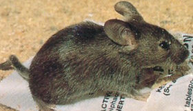 Pest Management Services   Barbados   Green's Exterminating