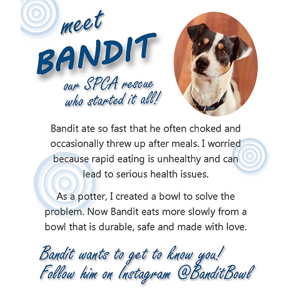 Bandit's Story Infographic.jpg