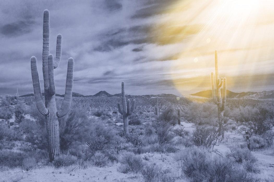 cactus%2520black%2520and%2520white%2520b