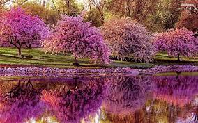 Sakura, a lenda japonesa que fala sobre amor verdadeiro
