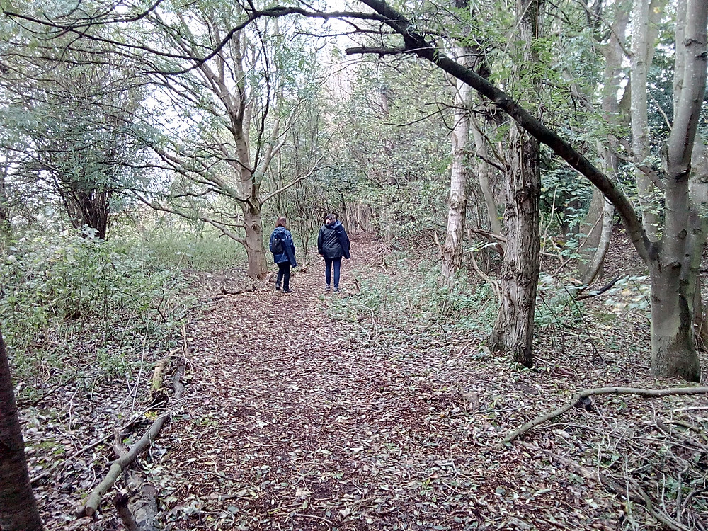 Forest MIndfulness walk Chester