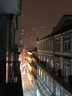 Porto street birds.JPG
