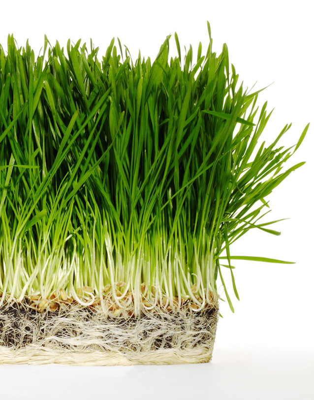 DoGoodBeBeautiful_CleaningProducts_Grass