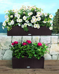 plant container 1.JPG