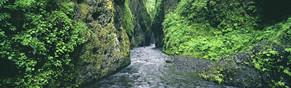 Oneonta Gorge web.jpg
