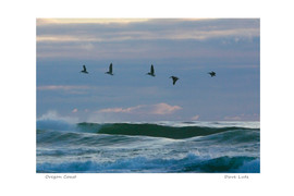 oregon coast birds over water_dxo_std.jp