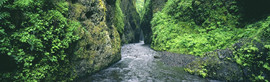 oneonta gorge to print_std.jpg