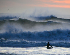 oregon surfer_std.jpg