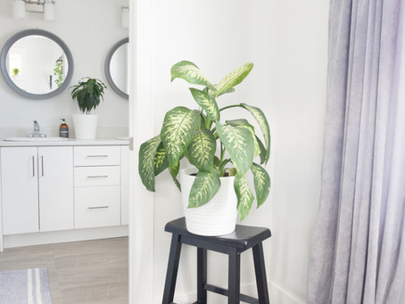 Low maintenance plants with big impact for home staging