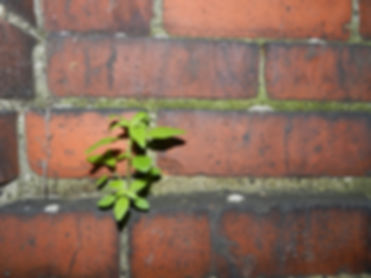 Small green plant growing from red brick