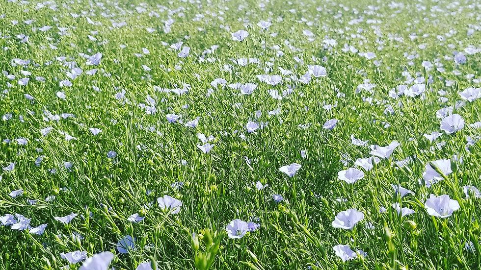 CDC GLAS Flaxseed