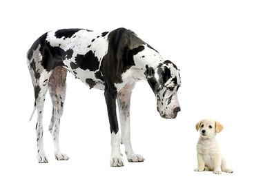pictures_originals_2013_Animals___Dogs__