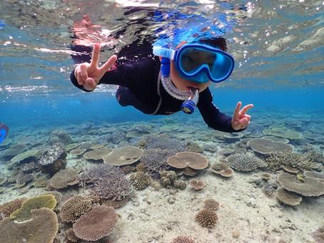 ウミガメと泳ぐスキンダイビング (素潜り)🧜♀️