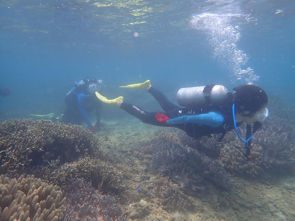 体験ダイビング 沖縄