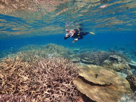 サップとスキンダイビング で沖縄本部町の海を満喫