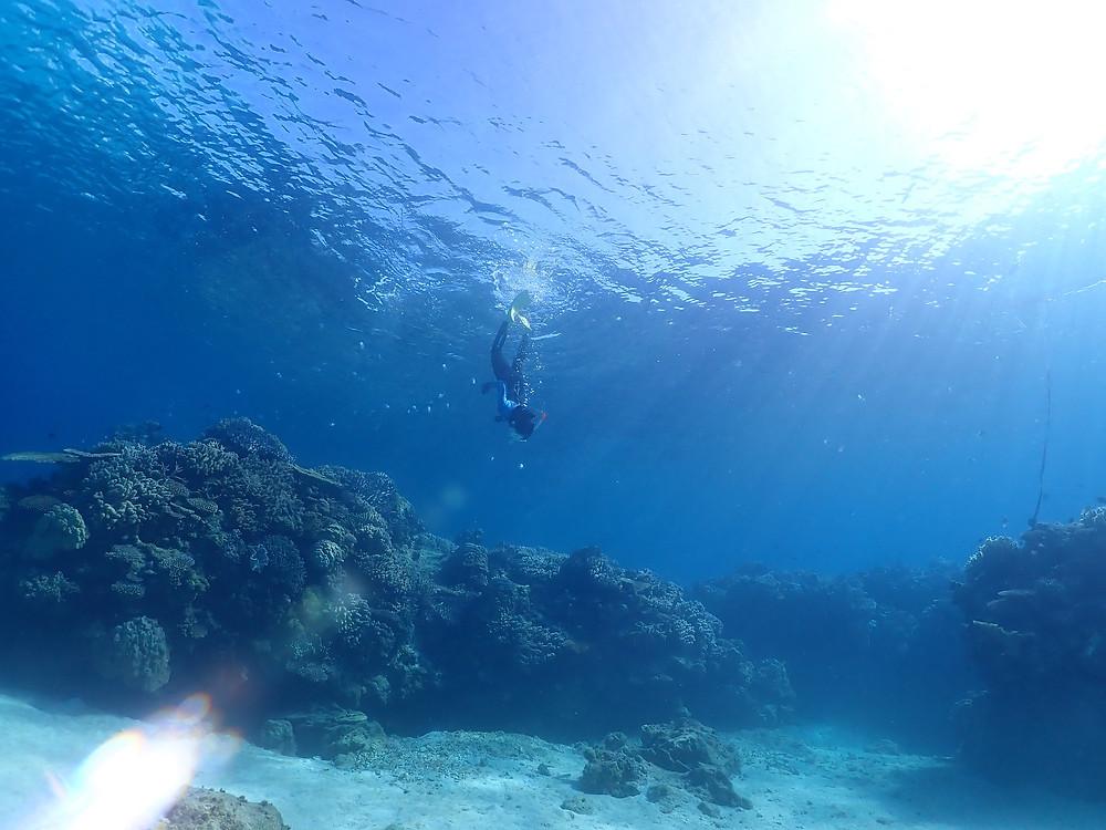 沖縄本部町でシュノーケリングとスキンダイビング