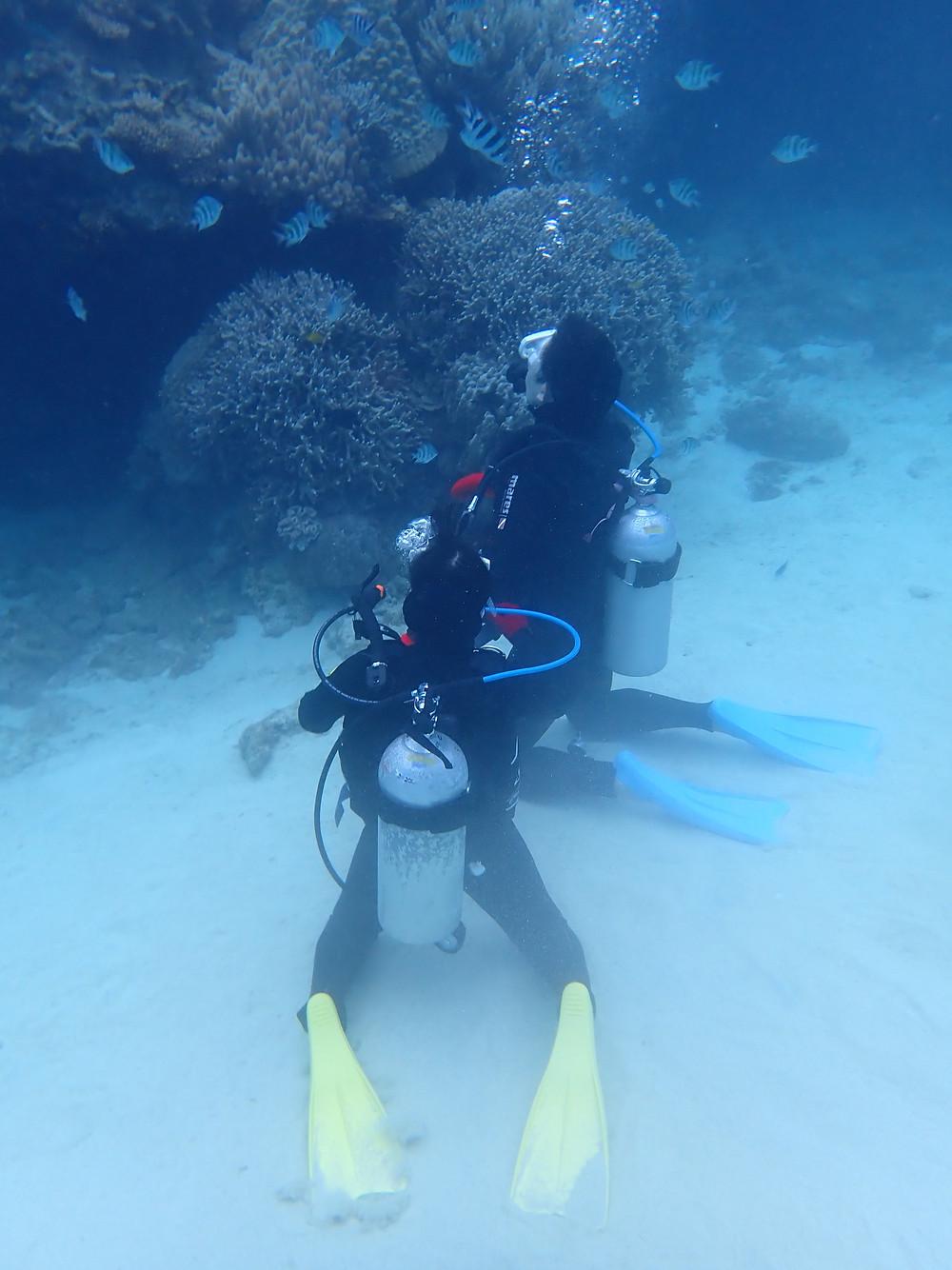 沖縄本部町でスキューバダイビング