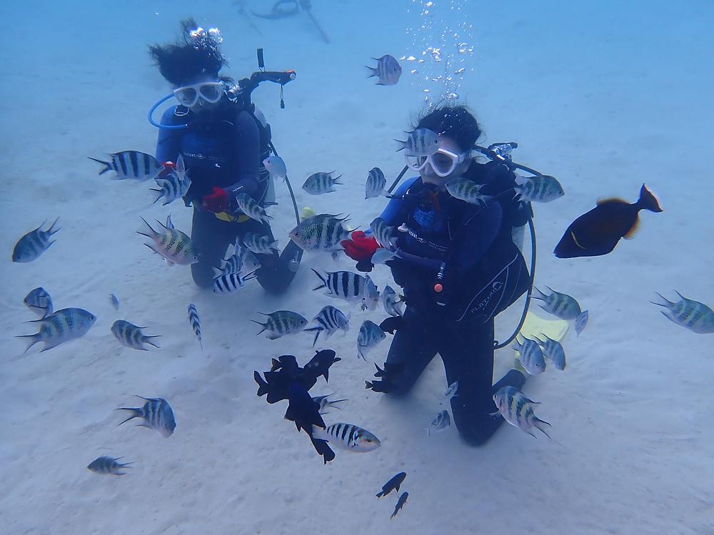沖縄北部本部町で体験ダイビング
