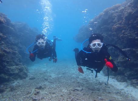 ゴリラチョップ ビーチ体験ダイビング 沖縄本部町
