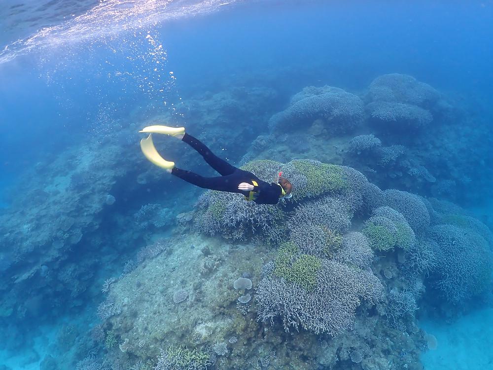 沖縄本島北部でスキンダイビング とシュノーケリング
