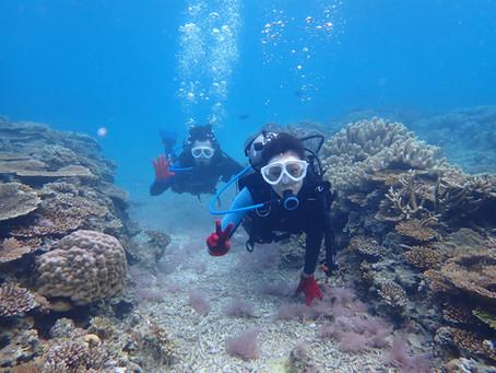 沖縄本島北部 ビーチ体験ダイビング ゴリラチョップ