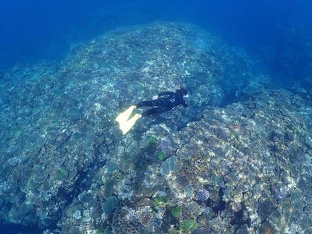 鯨の美しい声を聴きながらスキンダイビング (素潜り)🧜♀️ 沖縄北部