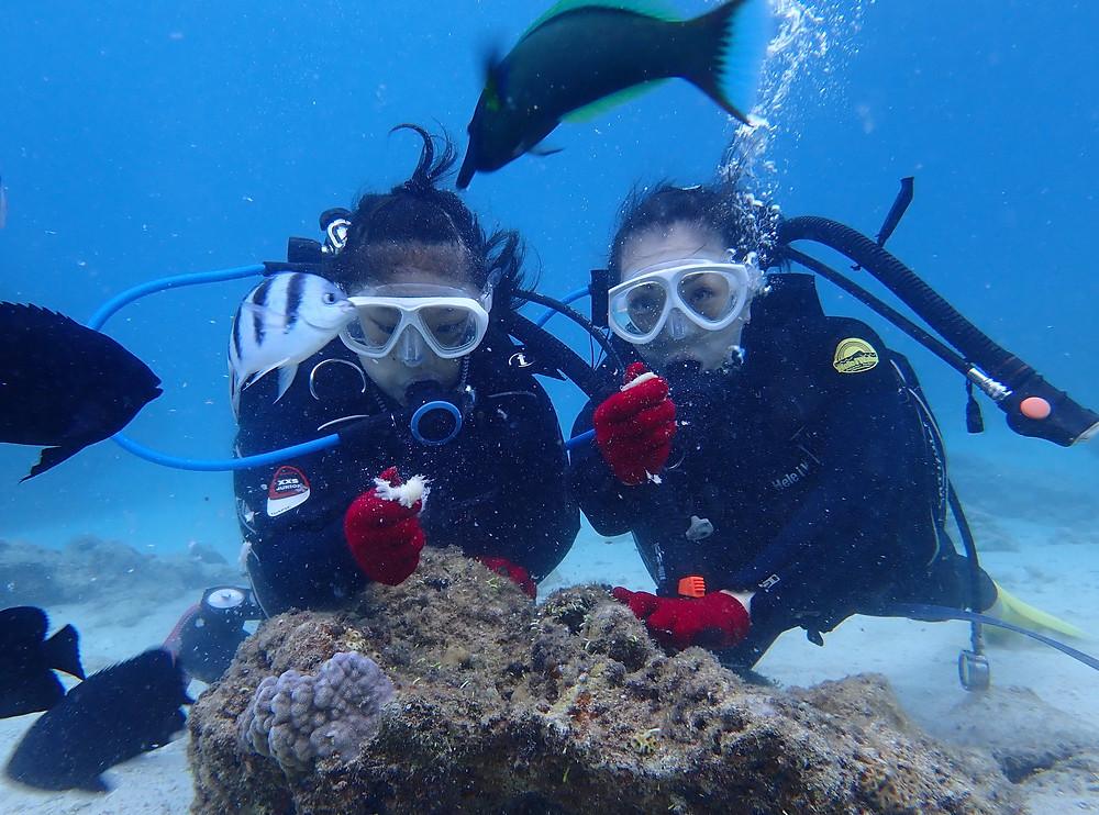 沖縄本部町ゴリラチョップで体験ダイビング