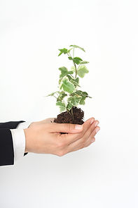 Photo of businessperson's hands holding a green plant growing out of organic soil