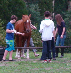 EAL session Windhorse Farm VIC AUST