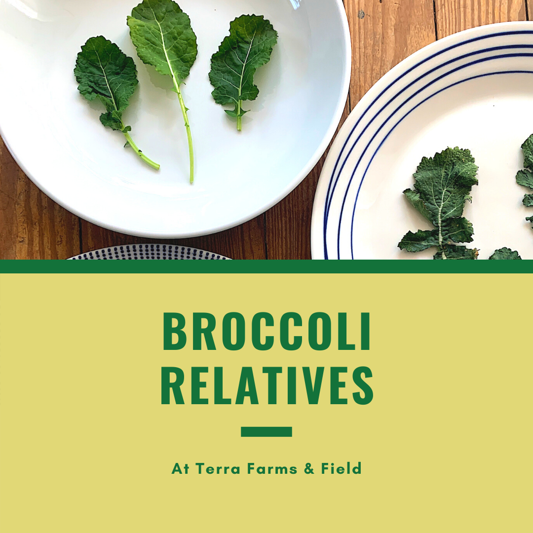Broccoli Relatives| TF