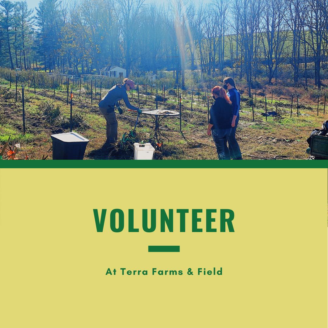 Volunteer at Terra Farms & Field
