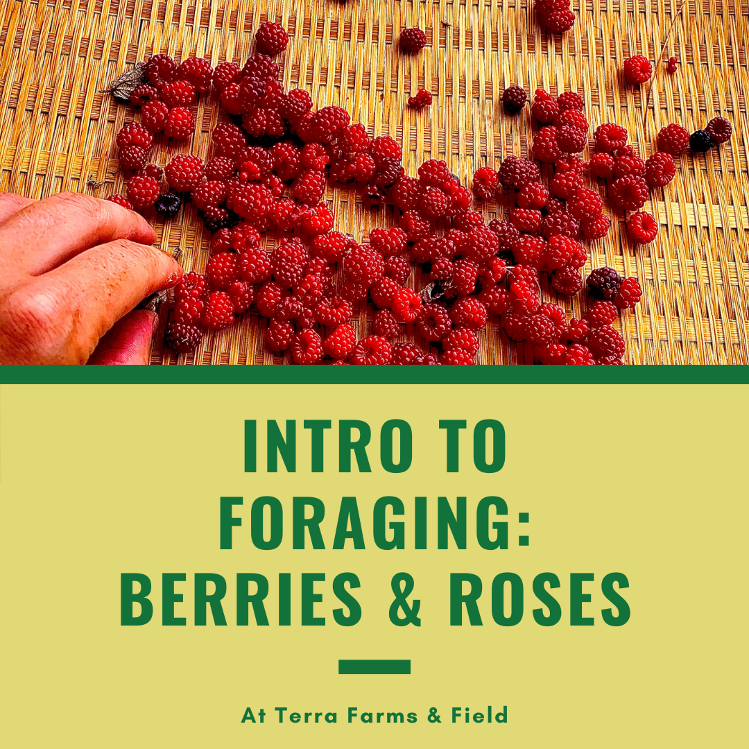 Intro to Foraging Berries & Roses | TF