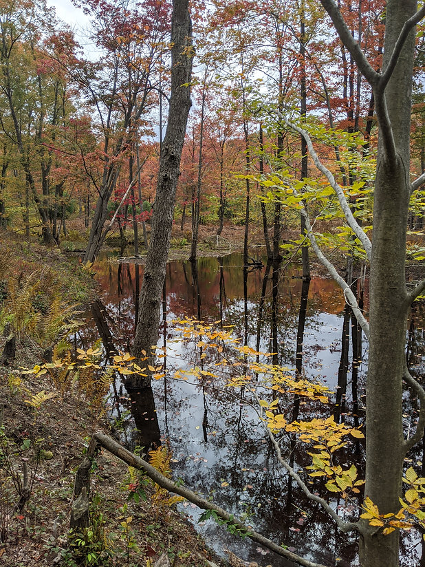 A swampy forest in the fall