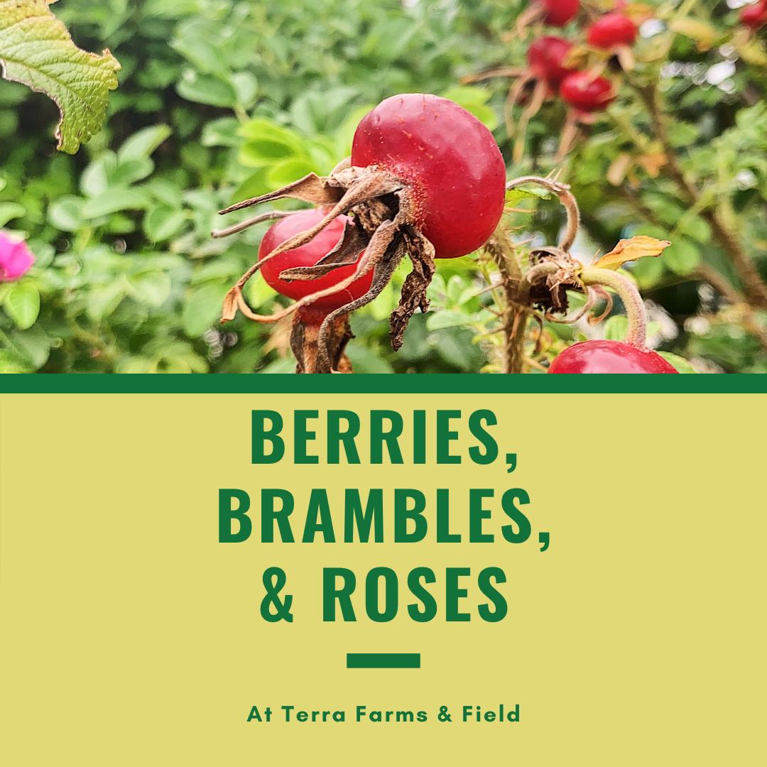 Berries, Brambles & Roses | TF