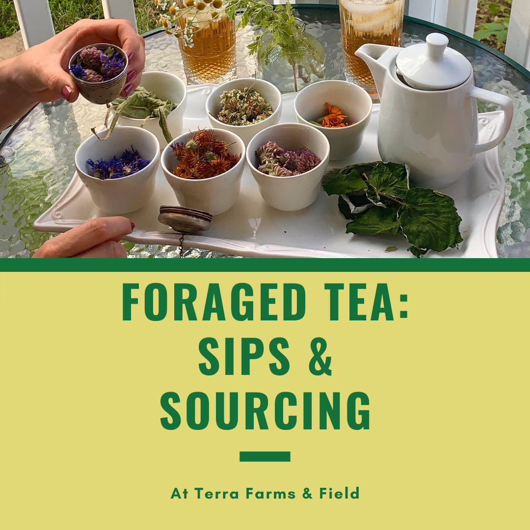 Foraged Tea: Sips & Sourcing | TF