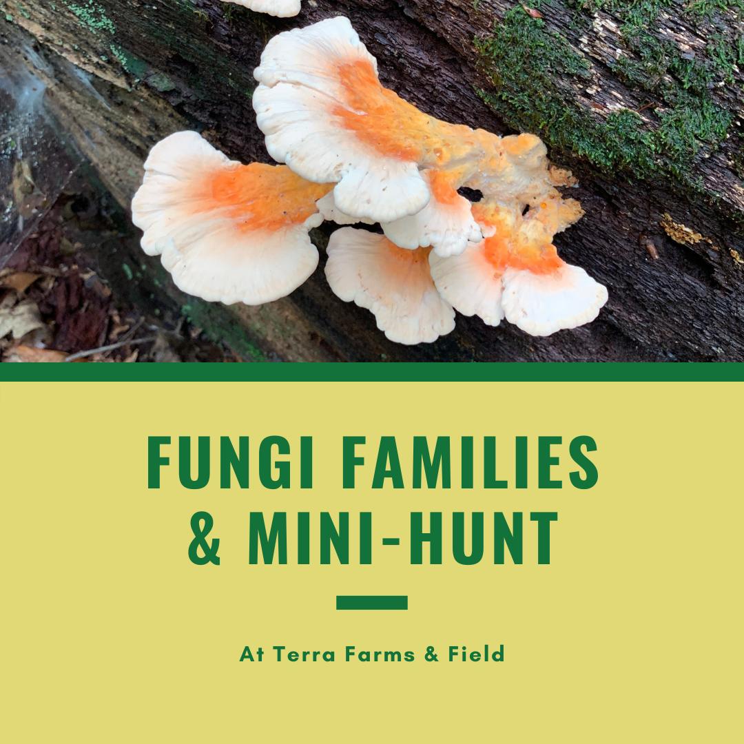 Fungi Families & Mini-Hunt | TF
