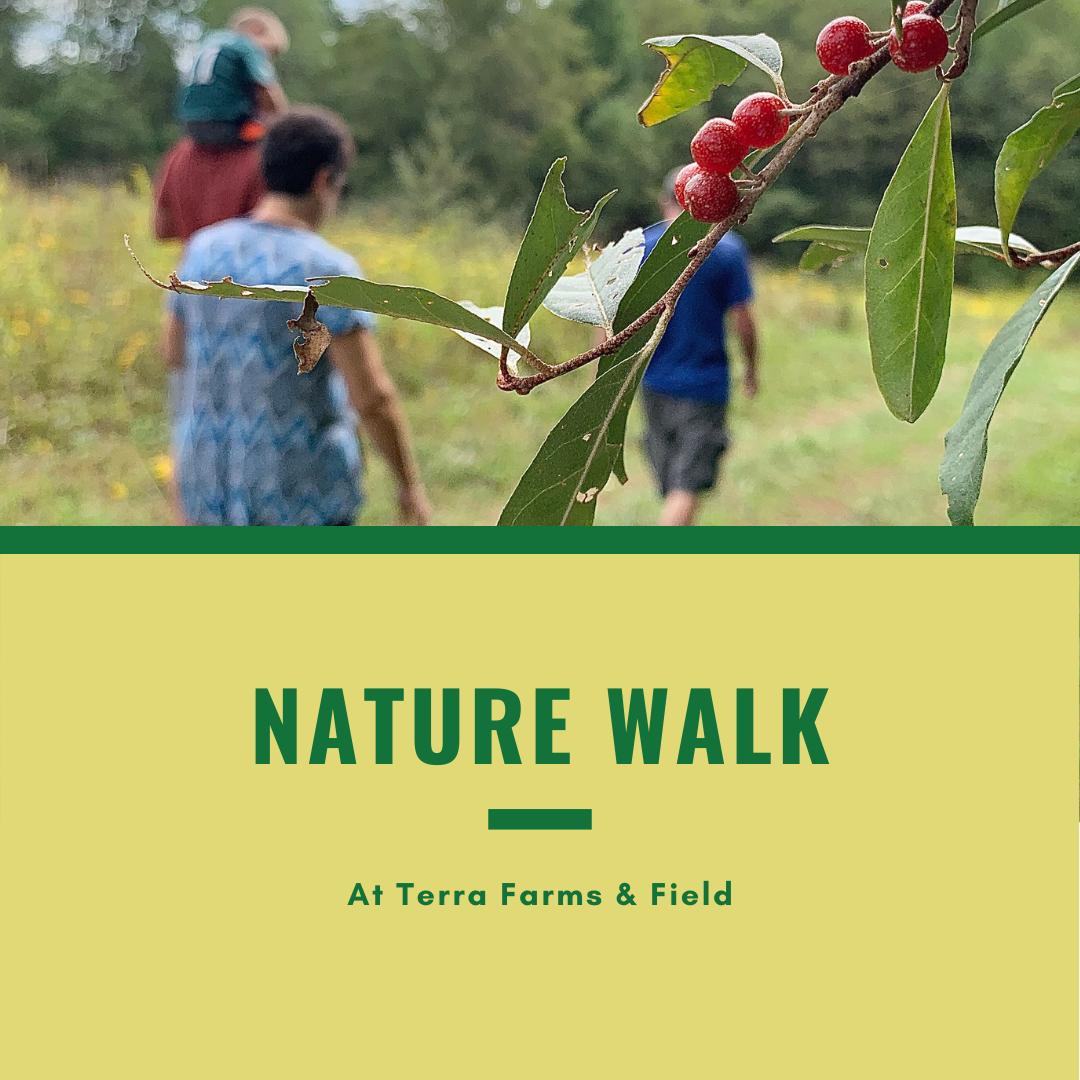 Nature & Mushroom Walk | TF