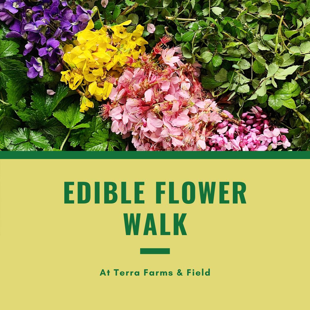 Edible Flower Walk | TF