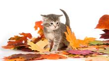 Fall Follies