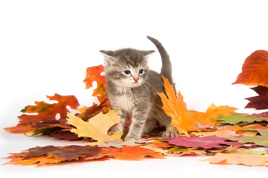 fall kitten.jpg