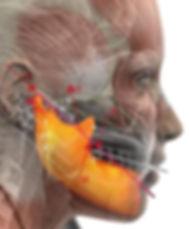 биомеханика жевания