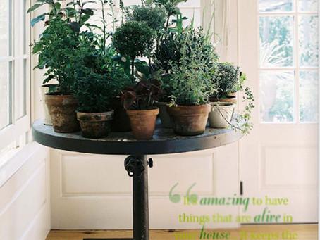 :: plantas ::