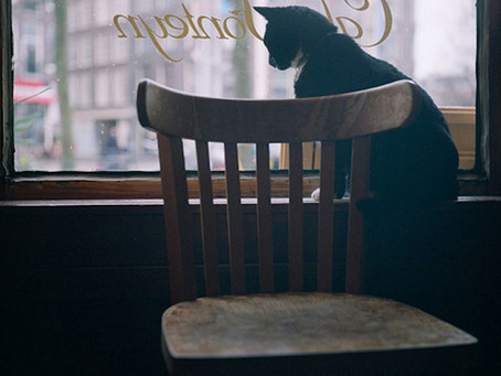 :: cats in bars ::
