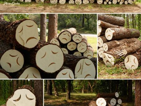 :: poor little trees ::